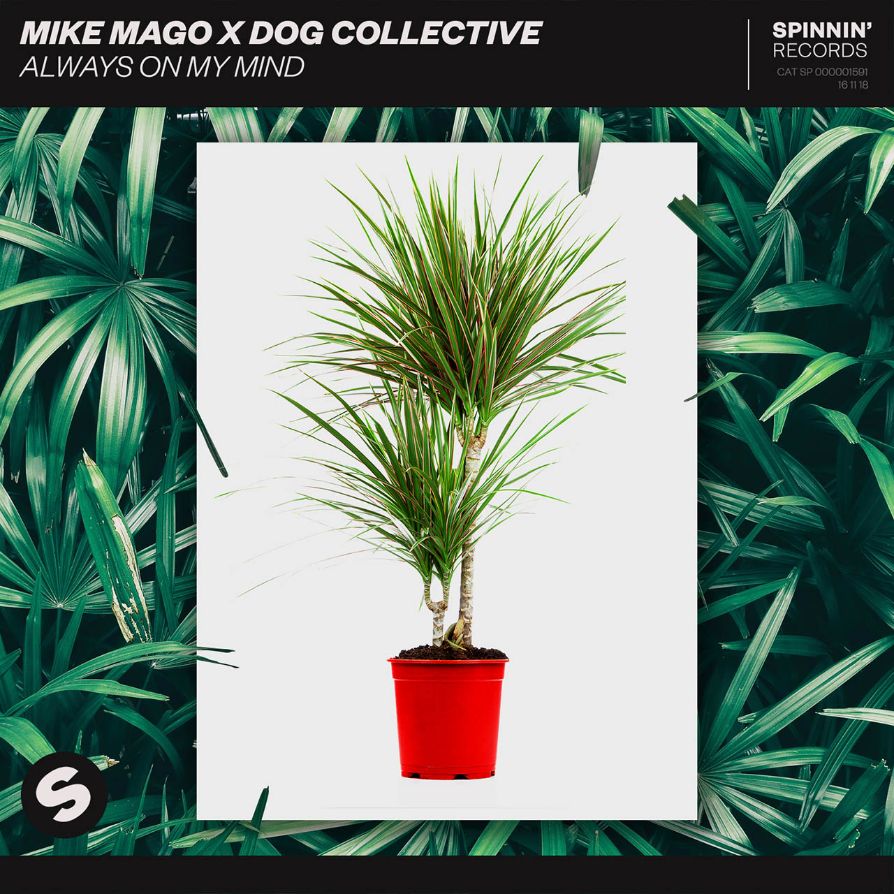 Mike Mago X The Dog Collective