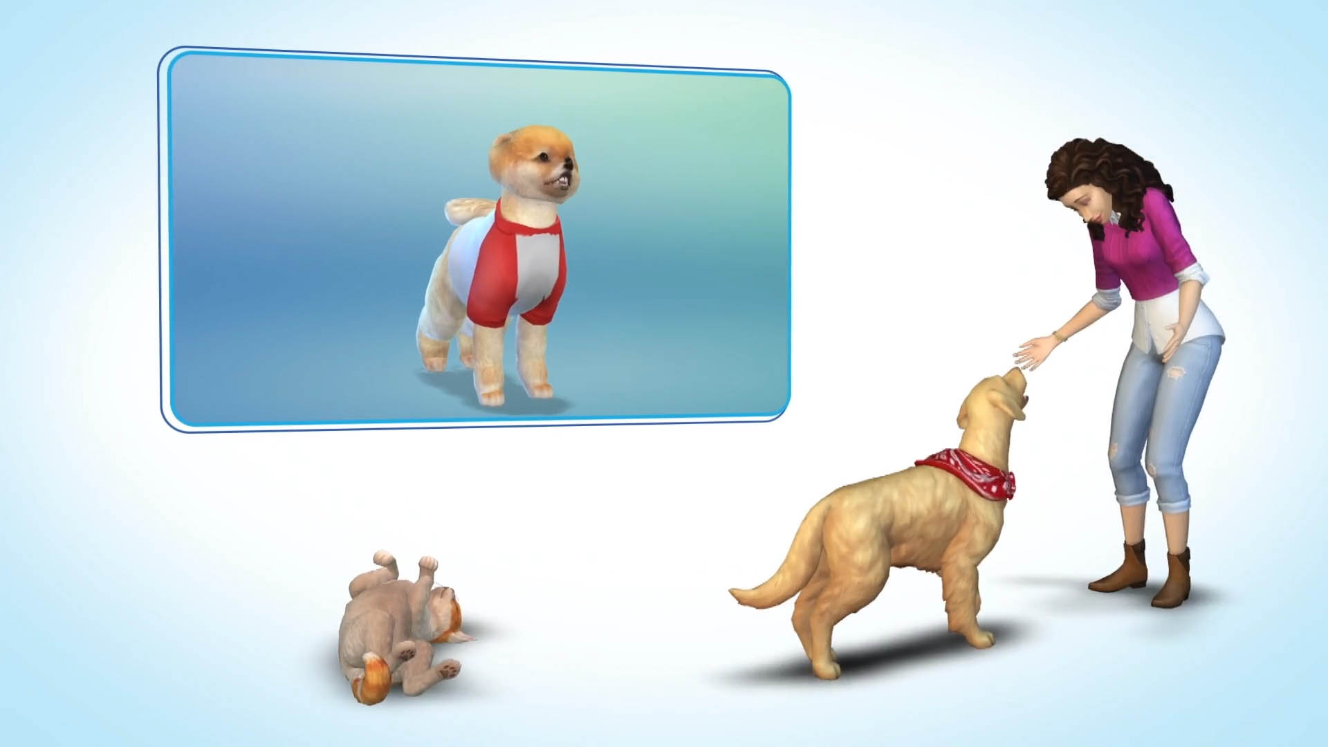 What Time Will Sims  Cats And Dogs Be Released