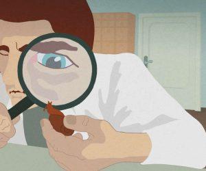 Animation Now - NZIFF