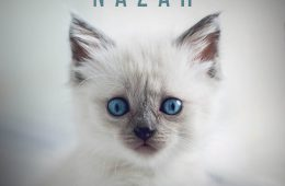 Nazar - Max Freegrant